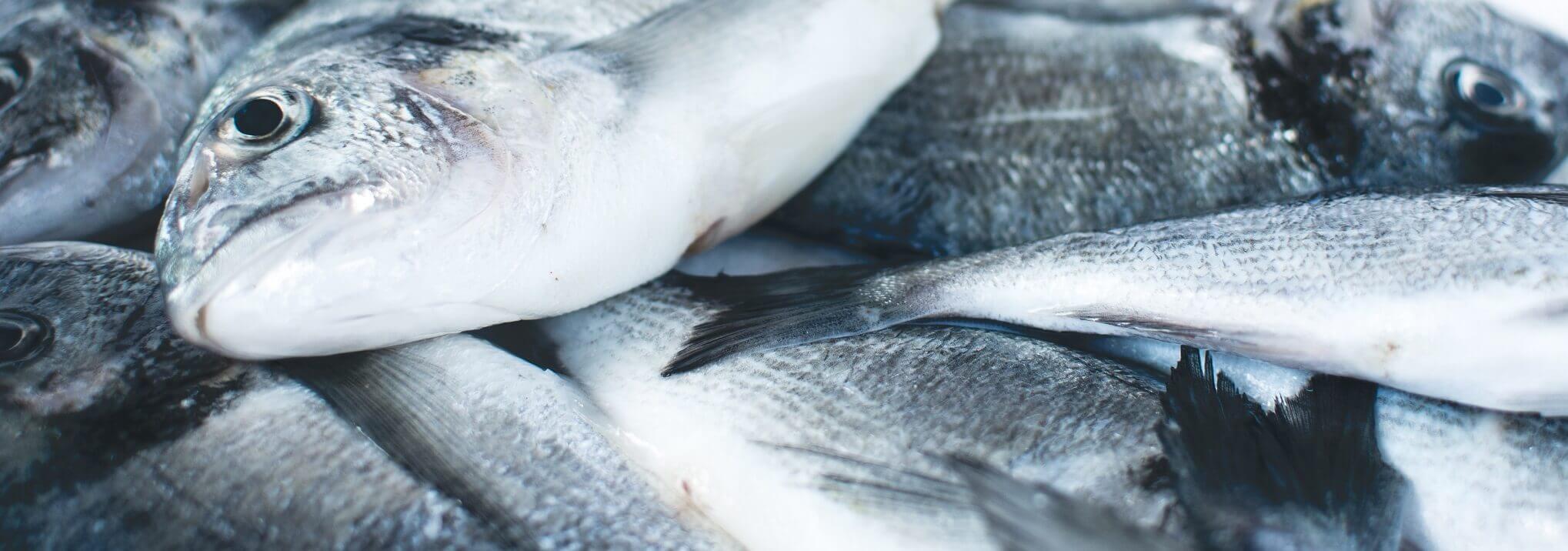 Sustainable Seafood Raja Ampat Indonesia