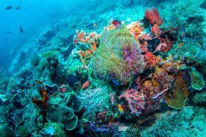 Photos_Raja_Ampat_Dive