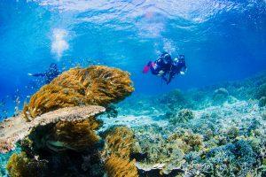 Photos_Scuba_And_Snorkeling_Trip