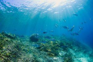 Photos_Scuba_Dive_Indonesia