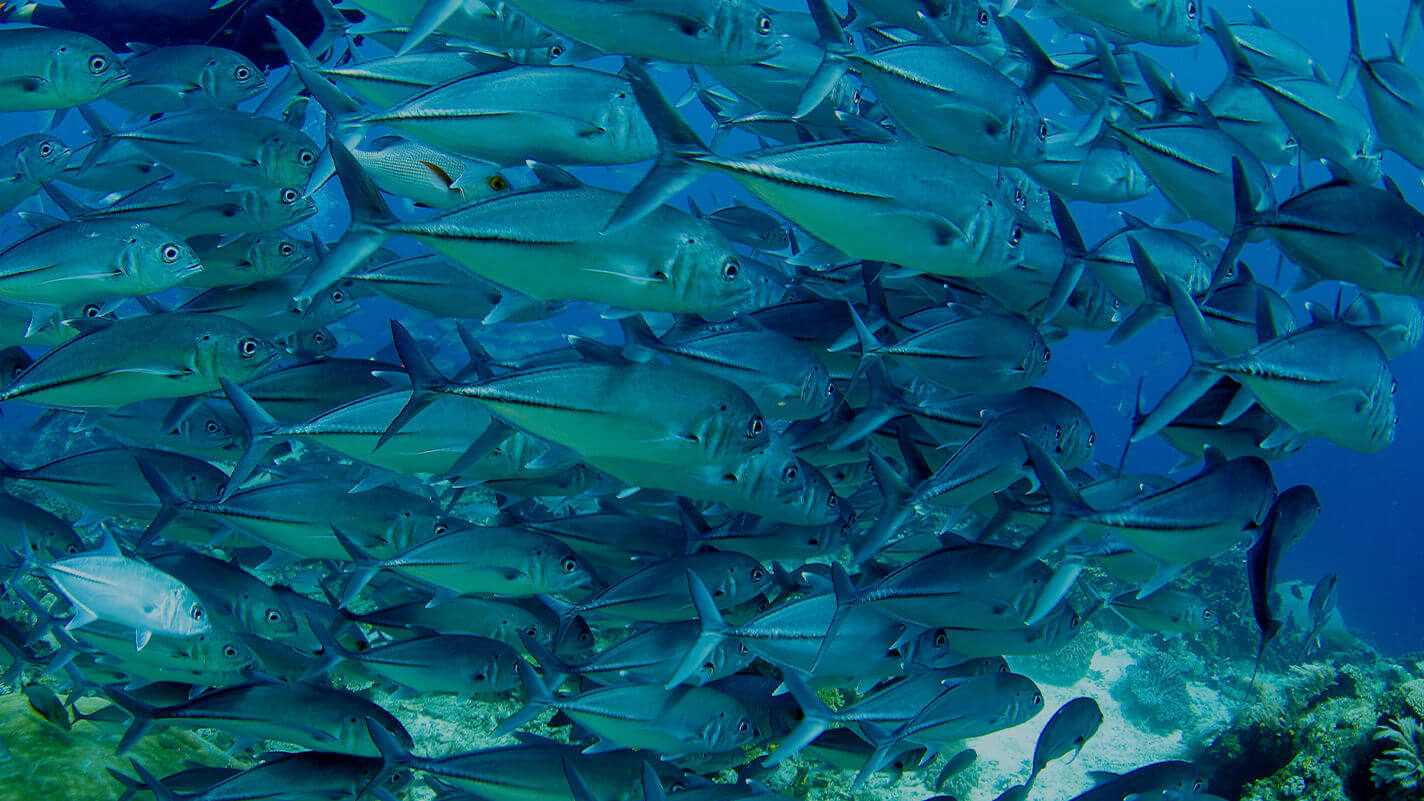 Meridian Adventures Dive Resort Scuba Diving