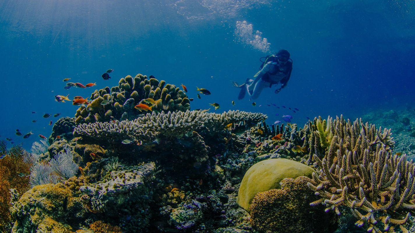Meridian Adventures Dive Resort Book PADI Advanced Open Water Diver Course