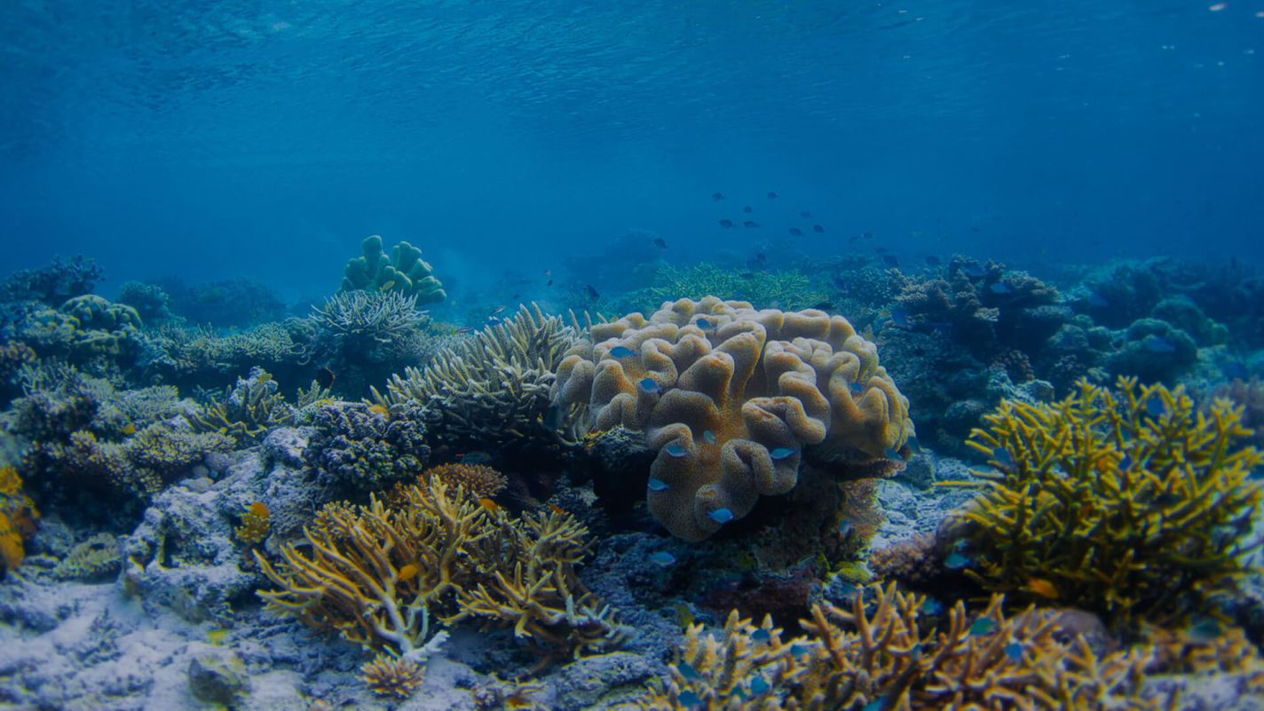 PADI coral reef conservation speciality course