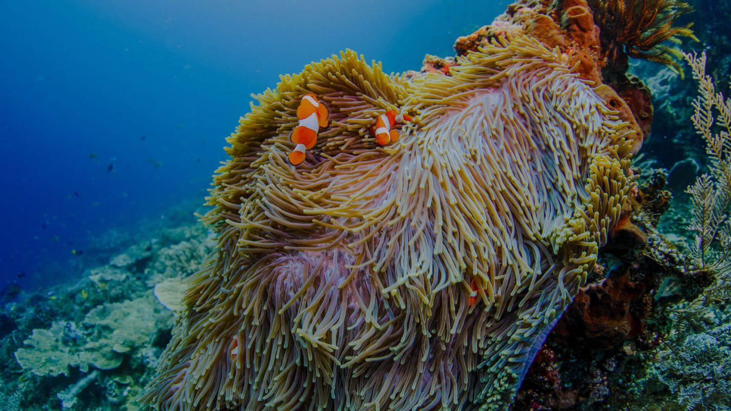 Meridian Adventures Dive Resort Book PADI Digital Underwater Photographer Course