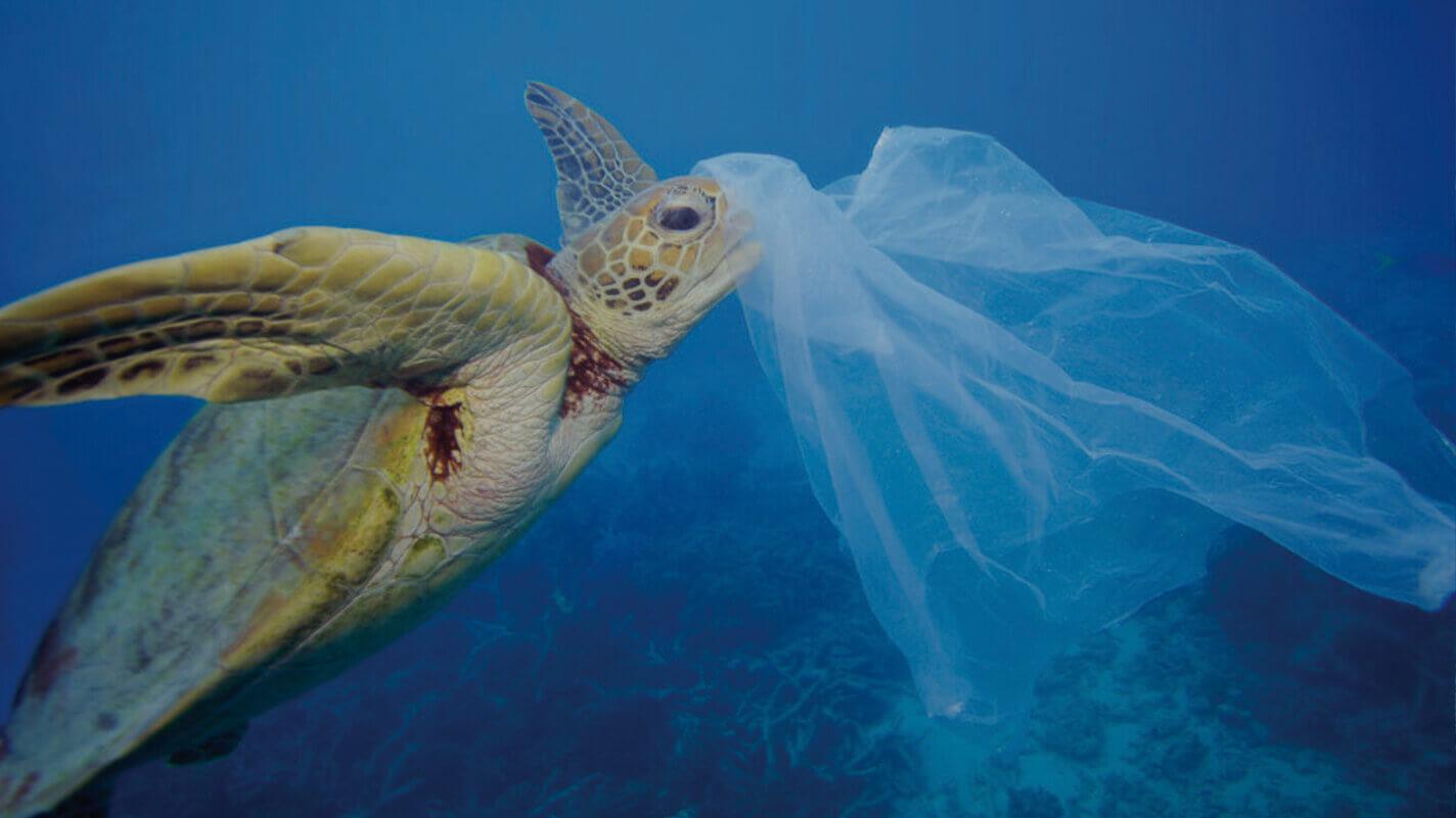 PADI dive against debris speciality course
