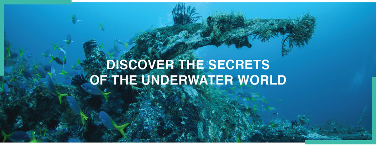 Discover the secrets of the underwater world