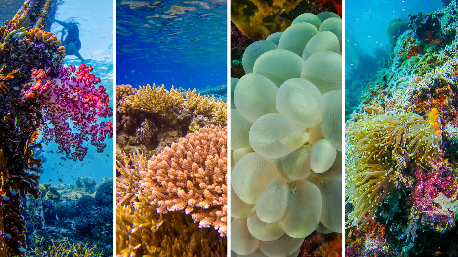 Coral Gardens in Dive Site