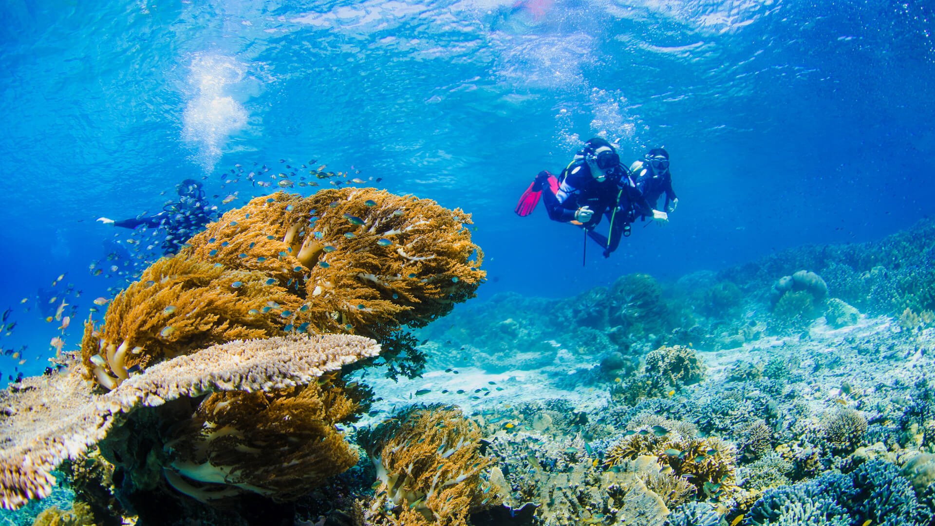 Become a Dive Master with our Dive Training Professional Internship in Raja Ampat, Indonesia
