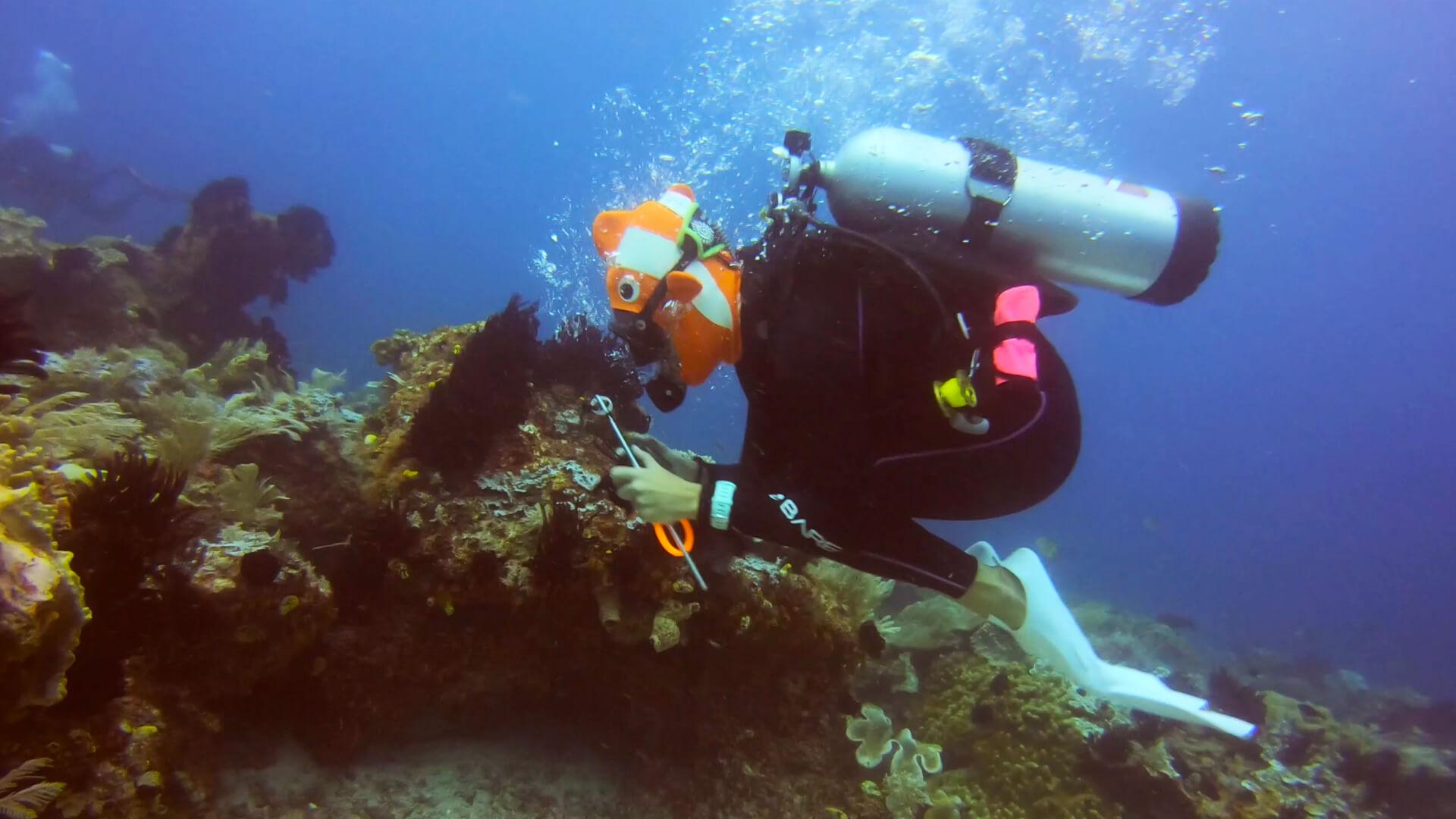 The Worm Raja Ampat