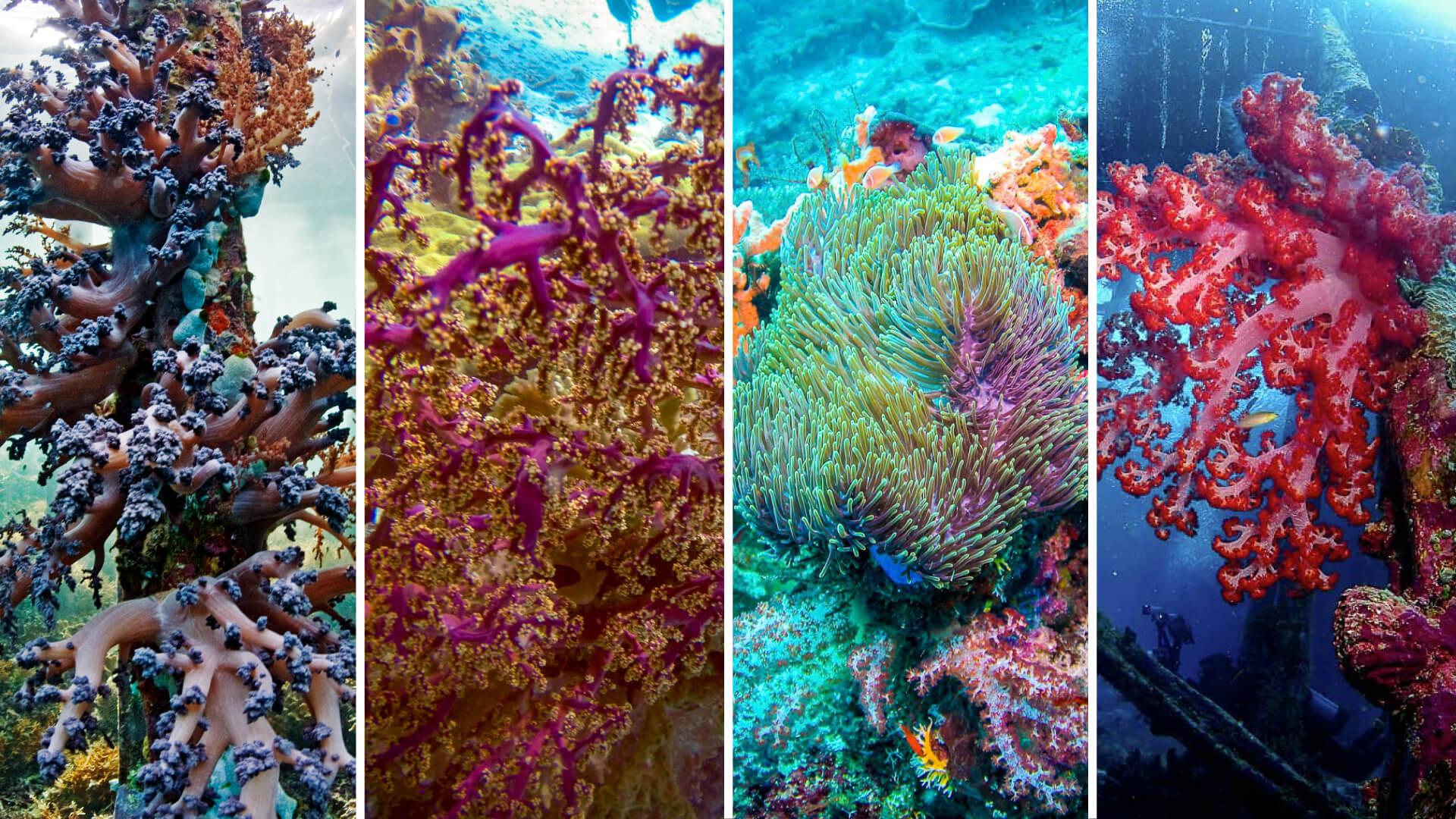 colourful coral gardens Raja Ampat