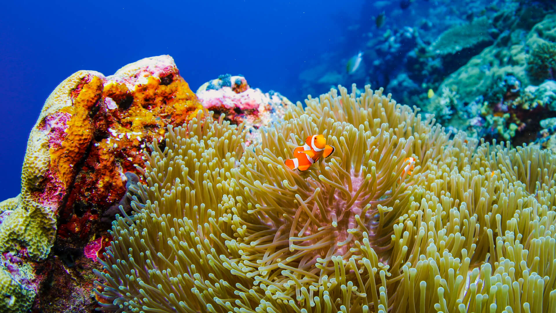 Reef Photography