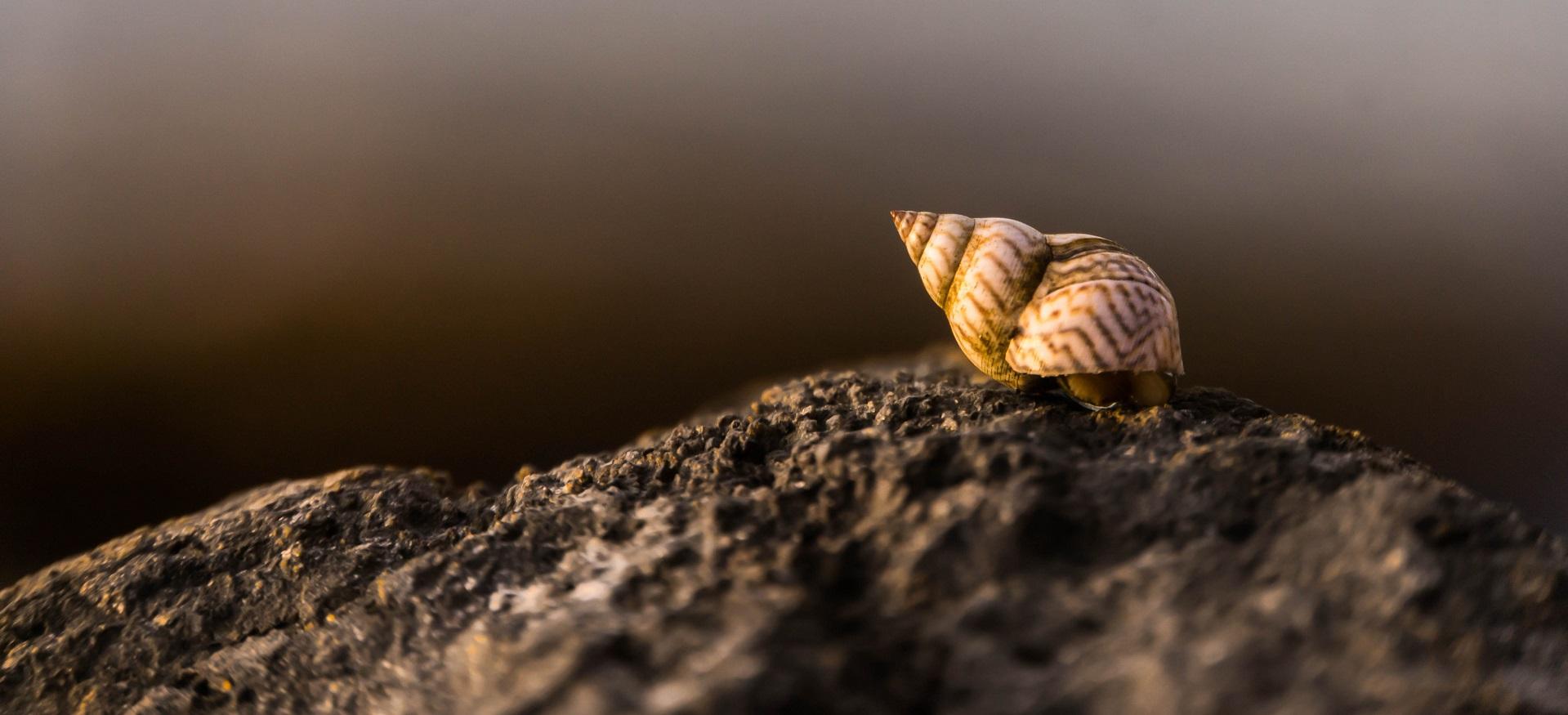 hermit crab blog